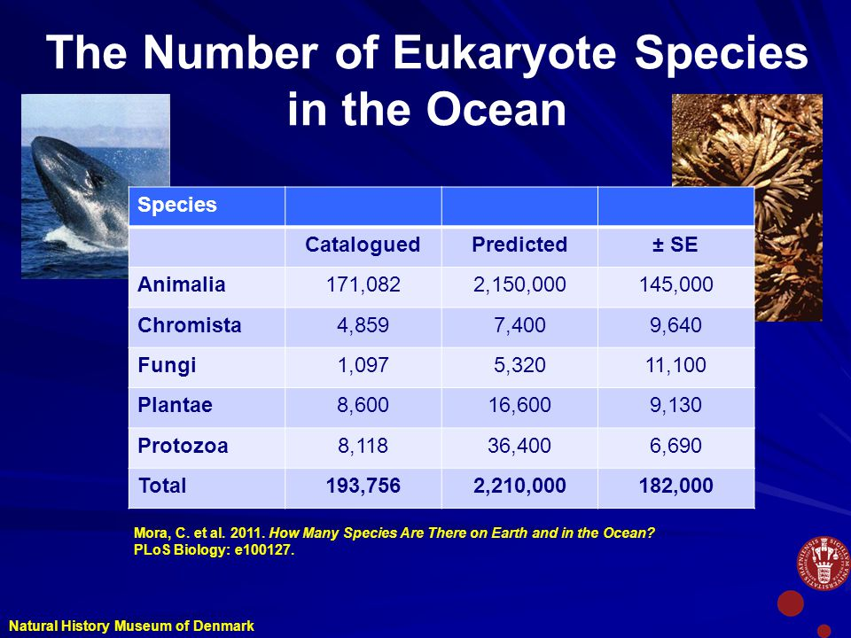 The Number of Eukaryote Species in the Ocean Species CataloguedPredicted± SE Animalia171,0822,150,000145,000 Chromista4,8597,4009,640 Fungi1,0975,32011,100 Plantae8,60016,6009,130 Protozoa8,11836,4006,690 Total193,7562,210,000182,000 Natural History Museum of Denmark Mora, C.
