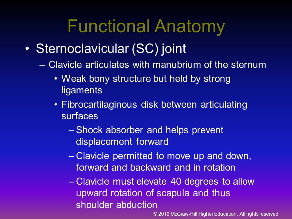 © 2010 McGraw-Hill Higher Education. All rights reserved. Functional Anatomy Sternoclavicular (SC) joint –Clavicle articulates with manubrium of the s