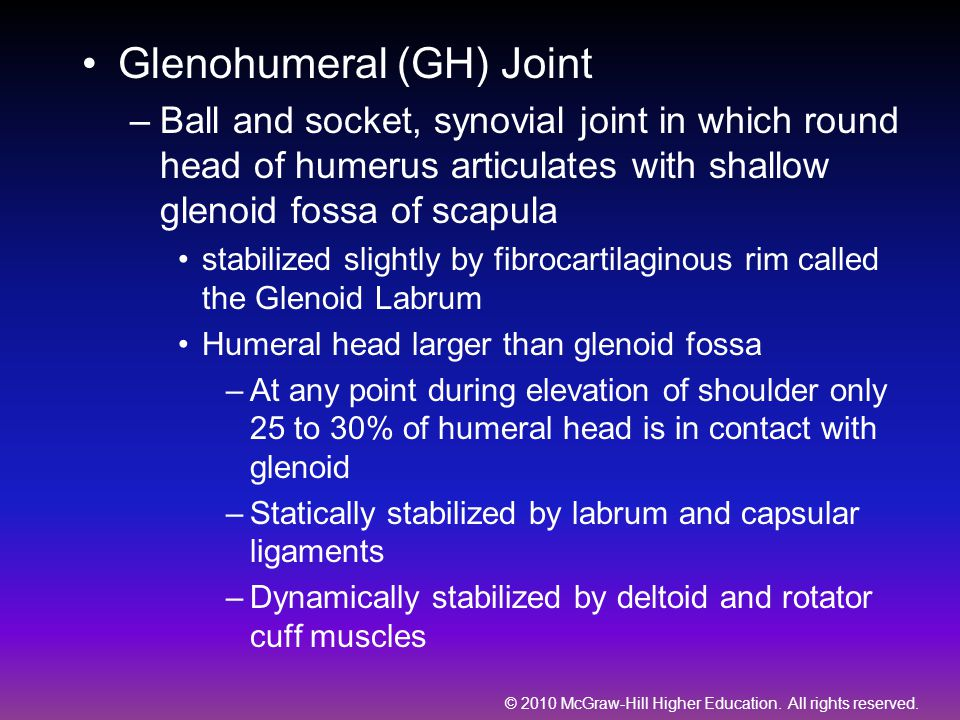 Glenohumeral (GH) Joint –Ball and socket, synovial joint in which round head of humerus articulates with shallow glenoid fossa of scapula stabilized s