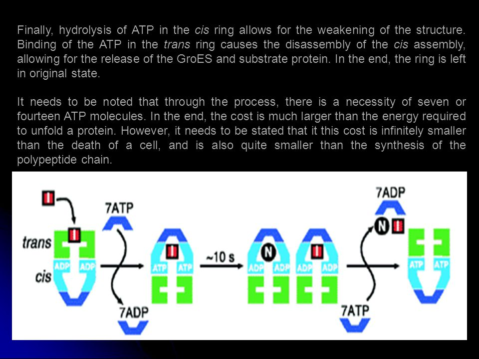 Finally, hydrolysis of ATP in the cis ring allows for the weakening of the structure.