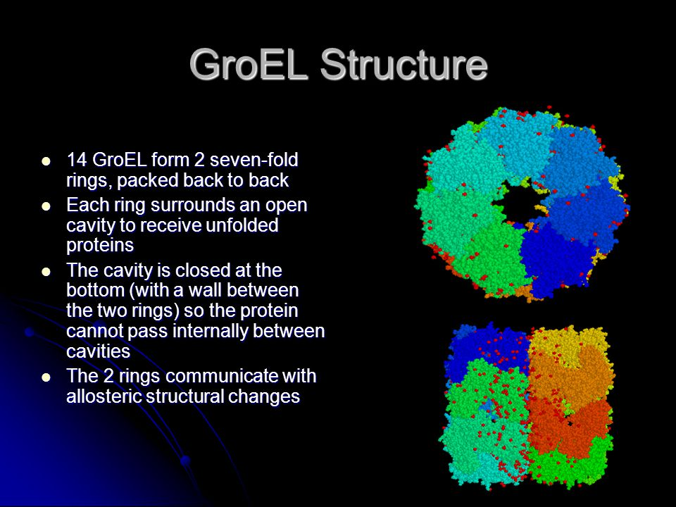 GroEL Structure 14 GroEL form 2 seven-fold rings, packed back to back 14 GroEL form 2 seven-fold rings, packed back to back Each ring surrounds an open cavity to receive unfolded proteins Each ring surrounds an open cavity to receive unfolded proteins The cavity is closed at the bottom (with a wall between the two rings) so the protein cannot pass internally between cavities The cavity is closed at the bottom (with a wall between the two rings) so the protein cannot pass internally between cavities The 2 rings communicate with allosteric structural changes The 2 rings communicate with allosteric structural changes