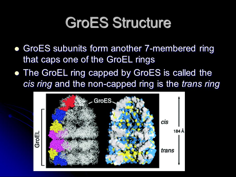 GroES Structure GroES subunits form another 7-membered ring that caps one of the GroEL rings GroES subunits form another 7-membered ring that caps one of the GroEL rings The GroEL ring capped by GroES is called the cis ring and the non-capped ring is the trans ring The GroEL ring capped by GroES is called the cis ring and the non-capped ring is the trans ring