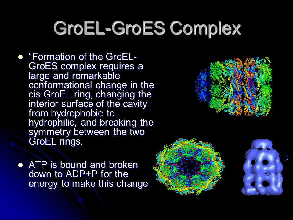 GroEL-GroES Complex Formation of the GroEL- GroES complex requires a large and remarkable conformational change in the cis GroEL ring, changing the interior surface of the cavity from hydrophobic to hydrophilic, and breaking the symmetry between the two GroEL rings.