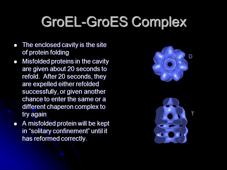GroEL-GroES Complex The enclosed cavity is the site of protein folding The enclosed cavity is the site of protein folding Misfolded proteins in the cavity are given about 20 seconds to refold.