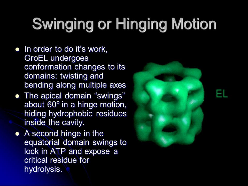 Swinging or Hinging Motion In order to do its work, GroEL undergoes conformation changes to its domains: twisting and bending along multiple axes In order to do its work, GroEL undergoes conformation changes to its domains: twisting and bending along multiple axes The apical domain swings about 60º in a hinge motion, hiding hydrophobic residues inside the cavity.