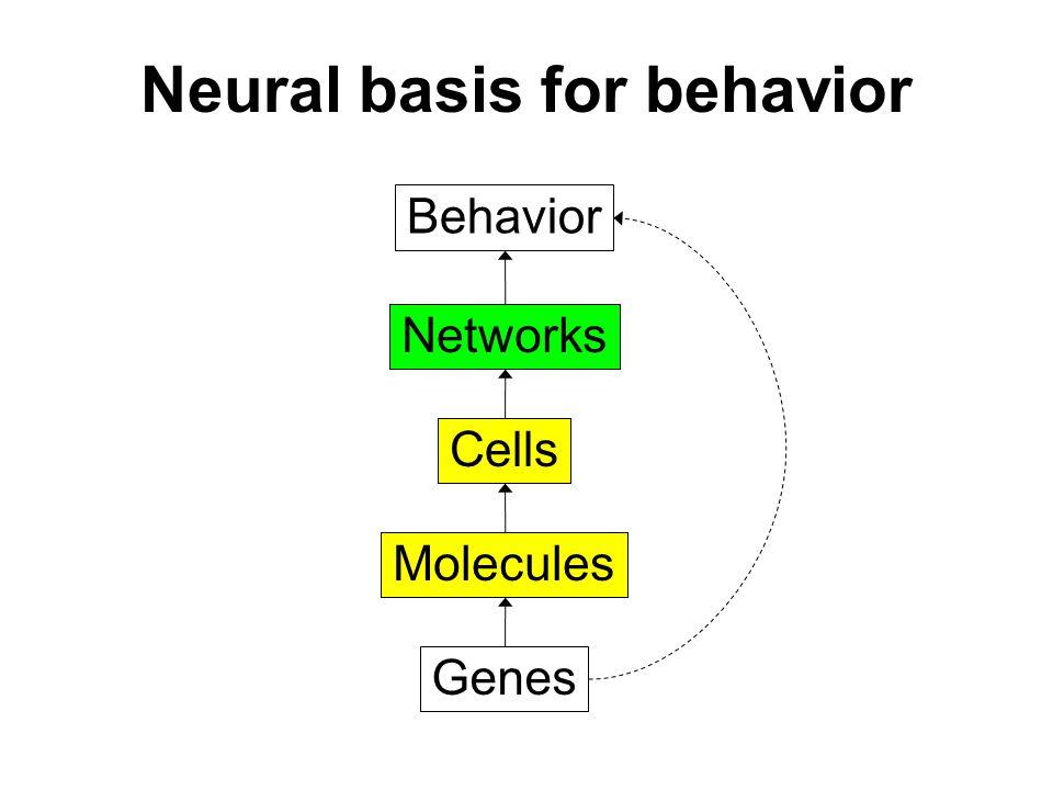 Neural basis for behavior Behavior Networks Cells Molecules Genes Networks Cells Molecules Networks