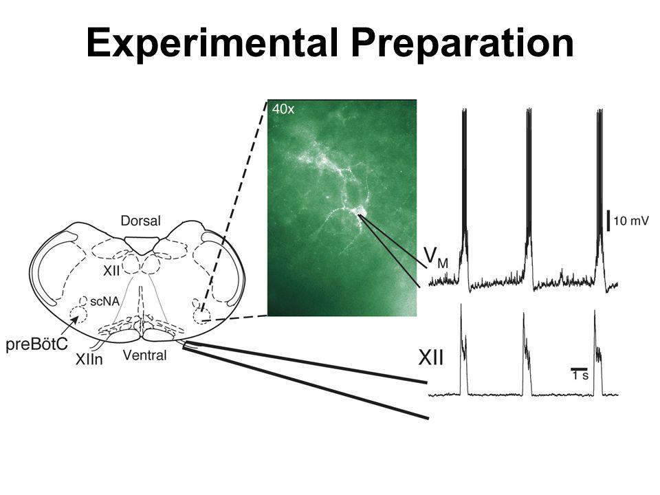 Experimental Preparation
