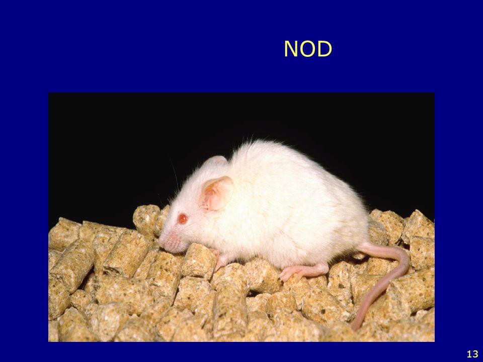 13 NOD