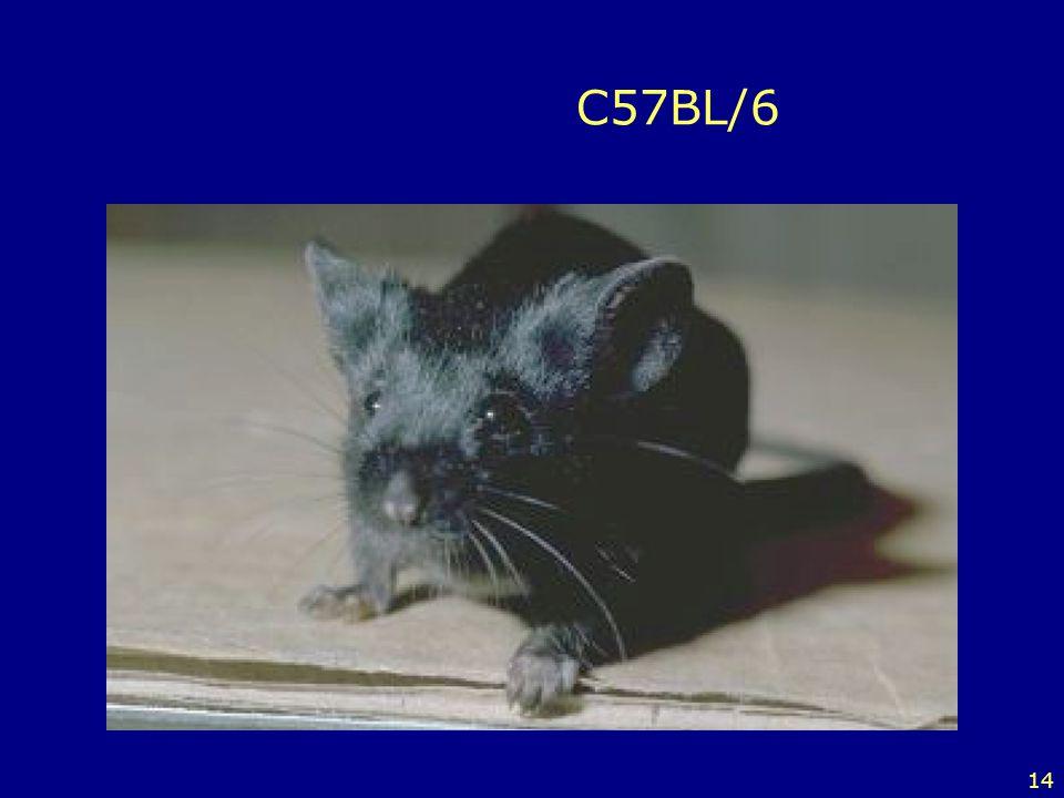 14 C57BL/6