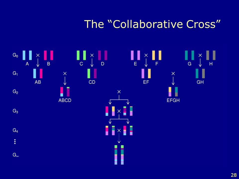 28 The Collaborative Cross