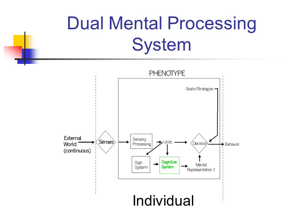 Dual Mental Processing System Individual