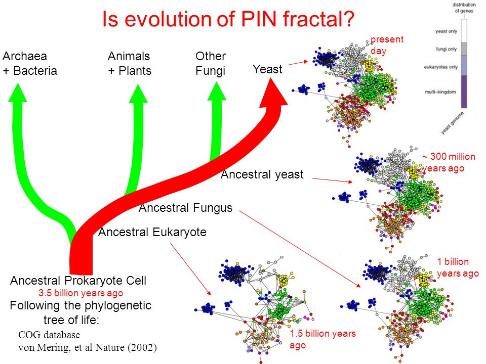 Is evolution of PIN fractal.
