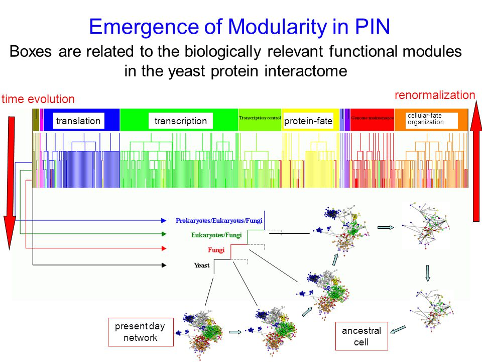 Emergence of Modularity in PIN Boxes are related to the biologically relevant functional modules in the yeast protein interactome time evolution renormalization present day network translationtranscriptionprotein-fate cellular-fate organization ancestral cell