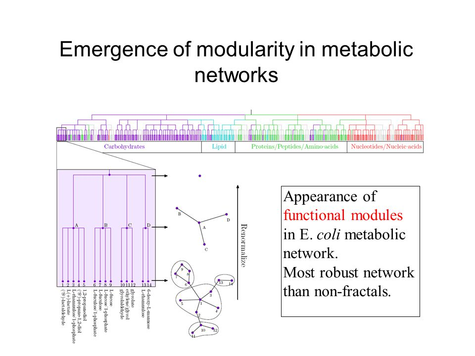 Emergence of modularity in metabolic networks Appearance of functional modules in E.
