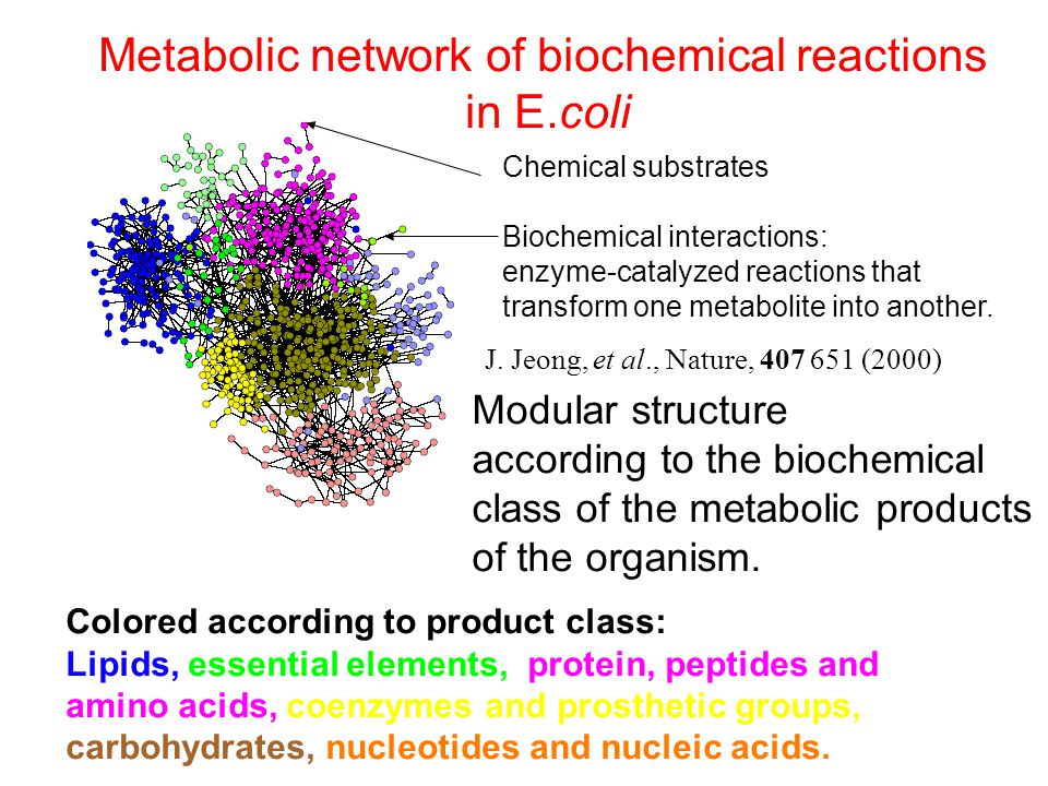 Metabolic network of biochemical reactions in E.coli Chemical substrates Biochemical interactions: enzyme-catalyzed reactions that transform one metabolite into another.
