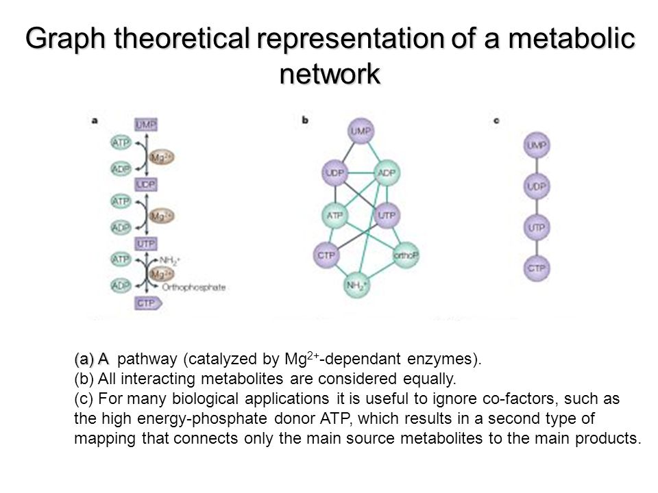 Graph theoretical representation of a metabolic network (a) A (a) A pathway (catalyzed by Mg 2+ -dependant enzymes).