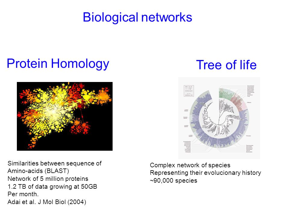 Biological networks Protein Homology Tree of life Similarities between sequence of Amino-acids (BLAST) Network of 5 million proteins 1.2 TB of data growing at 50GB Per month.