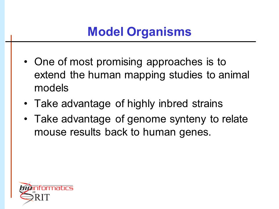 Model Organisms One of most promising approaches is to extend the human mapping studies to animal models Take advantage of highly inbred strains Take