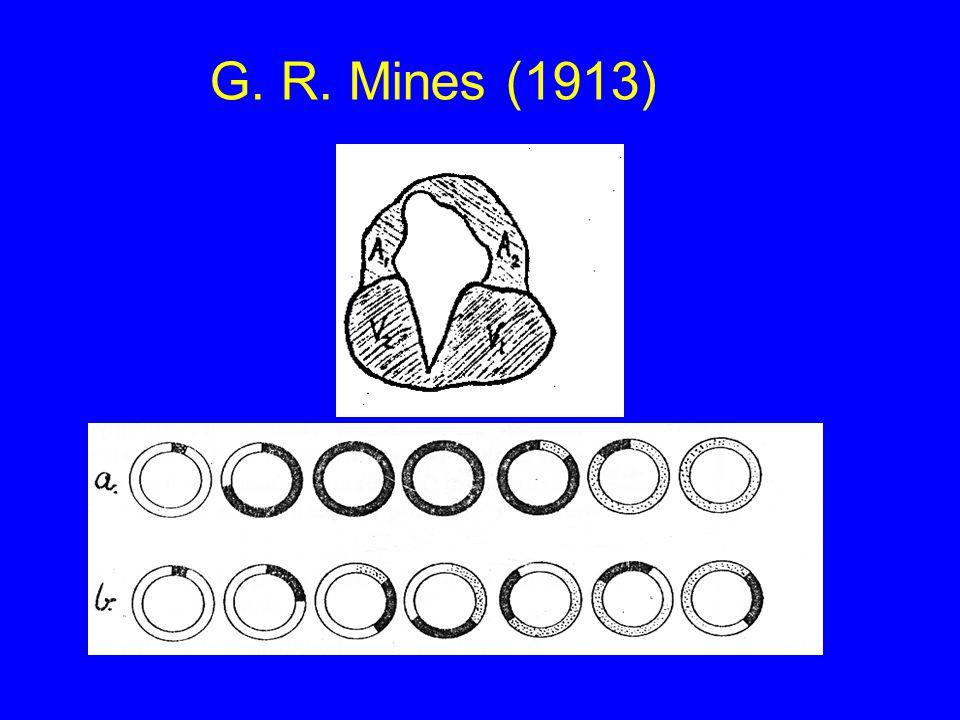 G. R. Mines (1913)