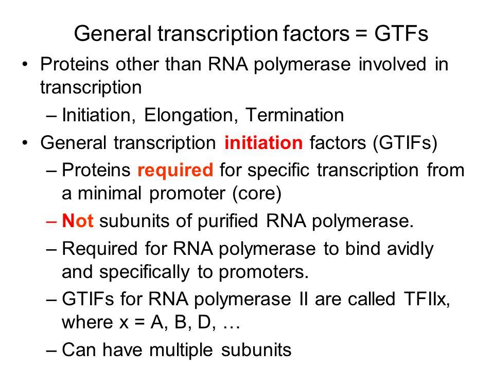 GTFs for RNA polymerase II TFIID TBP } TAFs IIB IIA IIE IIF IIH helicase protein kinase TBP Inr IIB IIA Pol IIa IIF IIE IIH CTD of large subunit of Pol II Recognize core promoter Targets Pol II to promoter Modulates helicase Helicase CTD protein kinase Many GTFs are possible targets for activators of transcription.