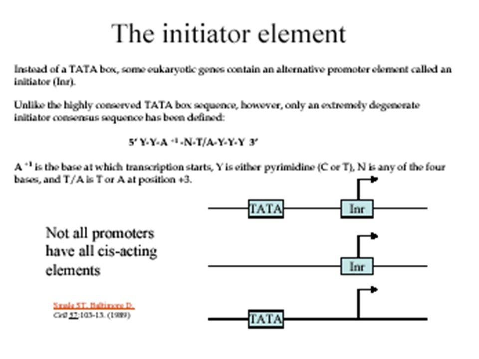 Random transcription by eukaryotic RNA polymerase Promoter Eukaryotic RNA pol II + Random initiation elongation Transcripts of random size