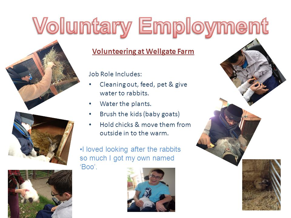 Volunteering at Wellgate Farm Job Role Includes: Cleaning out, feed, pet & give water to rabbits.