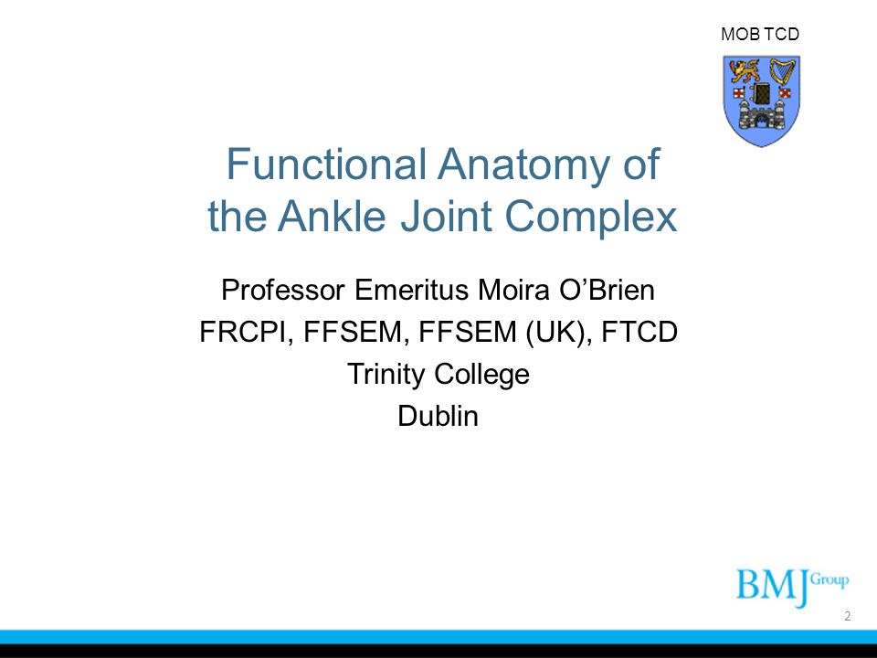 The Ankle Joint The ankle joint is one of the most common joints to be injured.