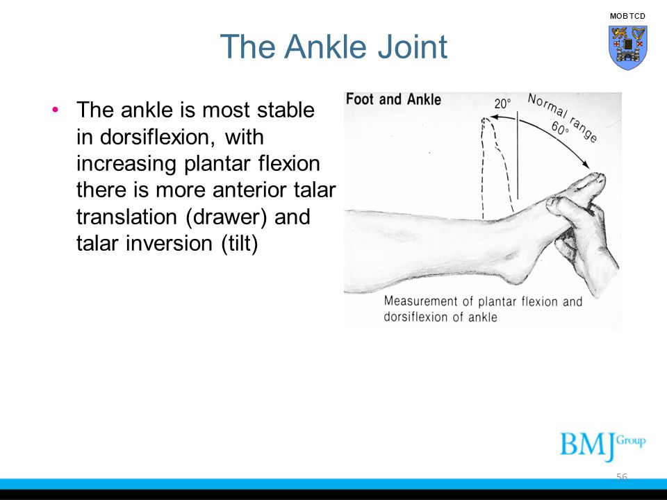 The ankle is most stable in dorsiflexion, with increasing plantar flexion there is more anterior talar translation (drawer) and talar inversion (tilt)