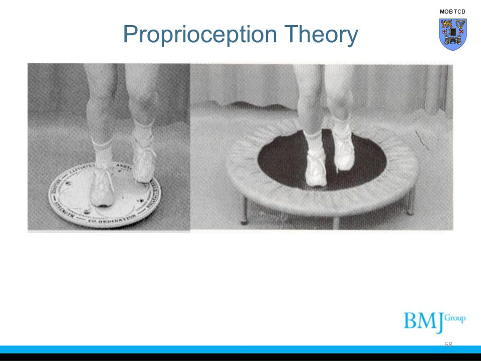 Proprioception Theory 68 MOB TCD