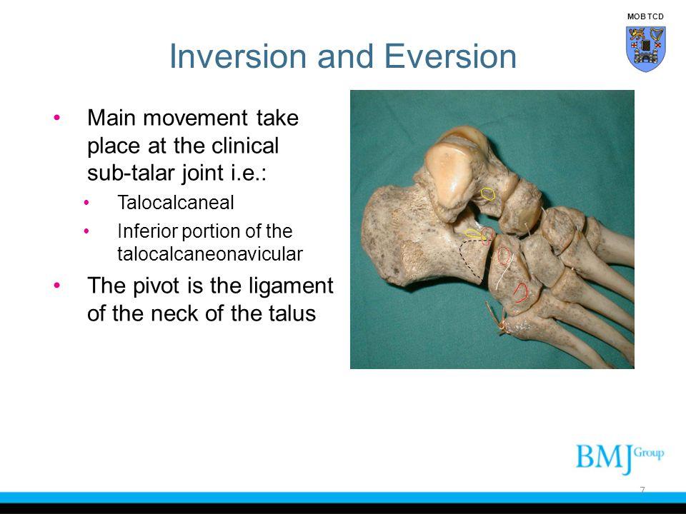 Achilles tendon Peroneal tendons Posterior tibial tendon Anterior process of calcaneus Talar dome Sinus tarsi Bifurcate ligament 58 Examination of Ankle MOB TCD