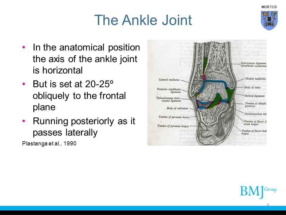 Tests for Ankle Ligament Injury 60 MOB TCD