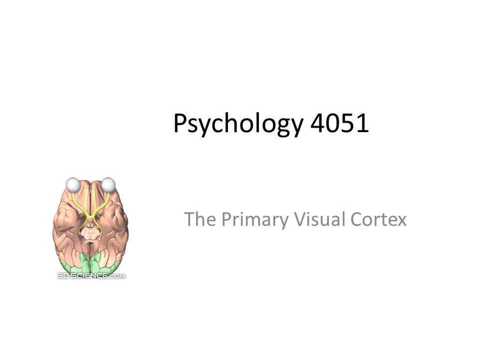 Psychology 4051 The Primary Visual Cortex