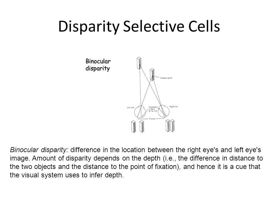 Disparity Selective Cells Binocular disparity: difference in the location between the right eye s and left eye s image.