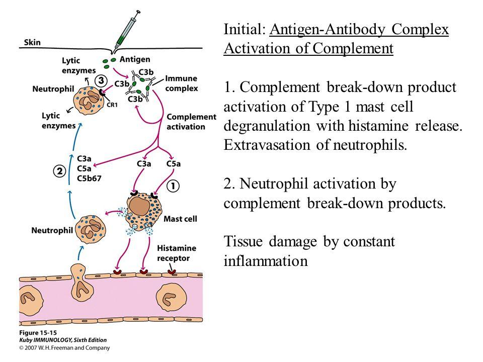 Initial: Antigen-Antibody Complex Activation of Complement 1.