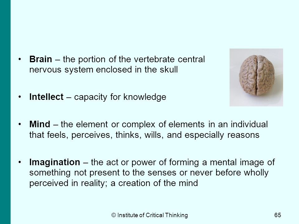 Brain – the portion of the vertebrate central nervous system enclosed in the skull Intellect – capacity for knowledge Mind – the element or complex of