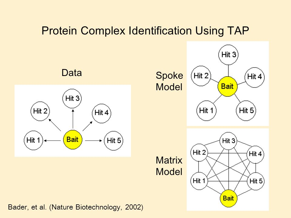 Protein Complex Identification Using TAP Data Spoke Model Matrix Model Bader, et al. (Nature Biotechnology, 2002)
