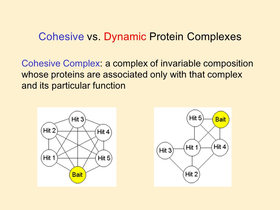 Cohesive vs. Dynamic Protein Complexes Cohesive Complex: a complex of invariable composition whose proteins are associated only with that complex and