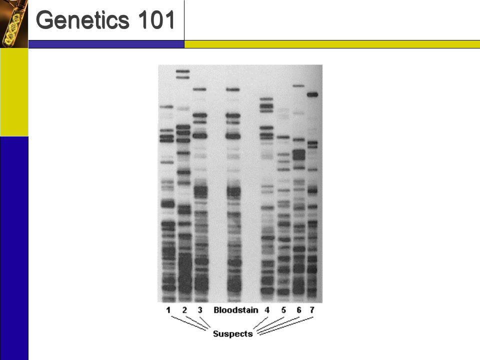 Genetics 101