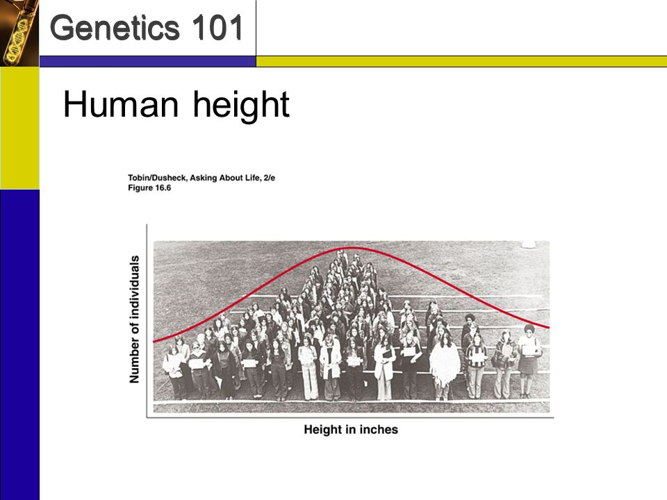 Genetics 101 Genome Content: The Traditional View ~1.5% of the genome is composed of protein- coding genes –Humans have around 21,000 genes.