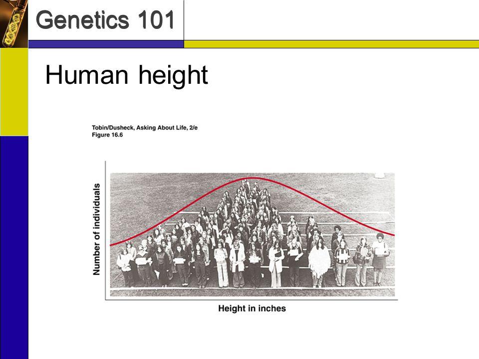 Genetics 101 Genetic Environmental Influences on Height United StatesSouth KoreaNorth Korea Males5 9.55 8.55 4.5 Females5 45 3.55 1.0 Data from Korea Center for Disease Control and Prevention US Centers for Disease Control and Prevention Average Height