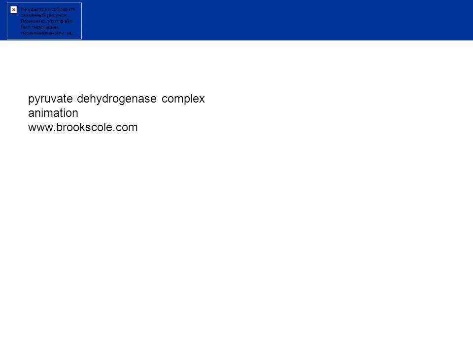 pyruvate dehydrogenase complex animation www.brookscole.com