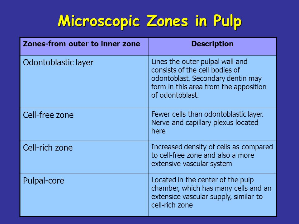 Zones-from outer to inner zoneDescription Odontoblastic layer Lines the outer pulpal wall and consists of the cell bodies of odontoblast. Secondary de