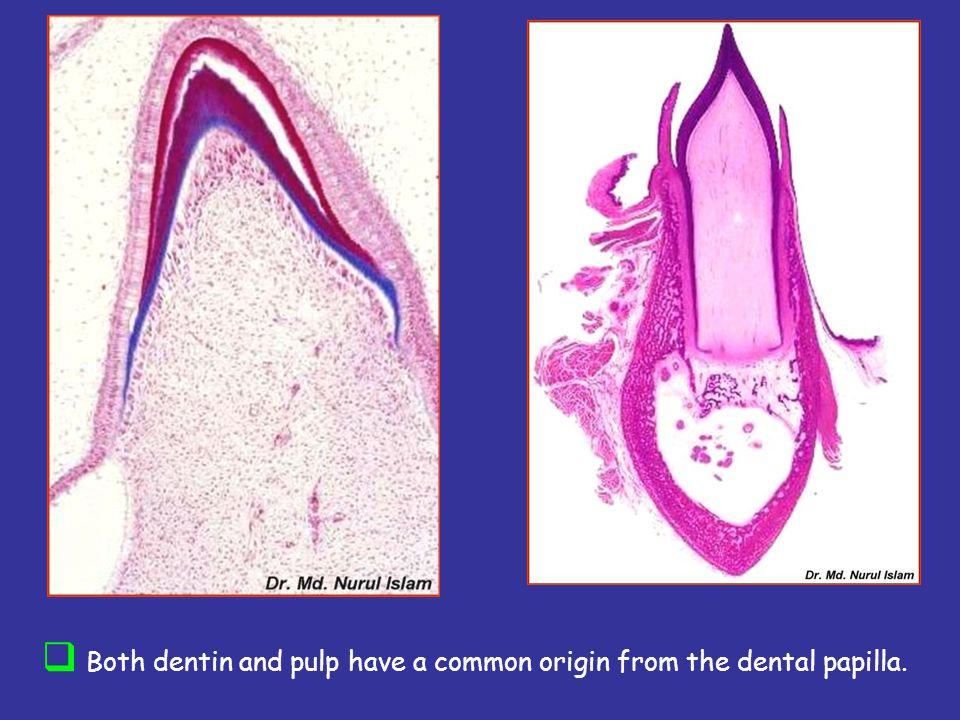 Peritubular dentinIntertubular dentin