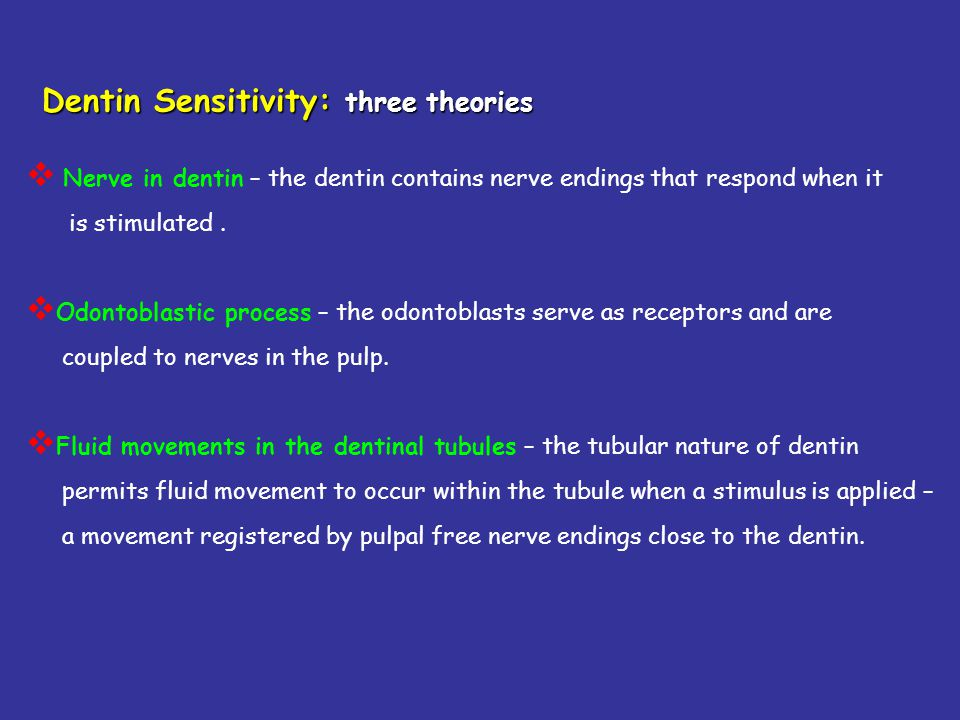 Dentin Sensitivity: three theories Nerve in dentin – the dentin contains nerve endings that respond when it is stimulated. Odontoblastic process – the