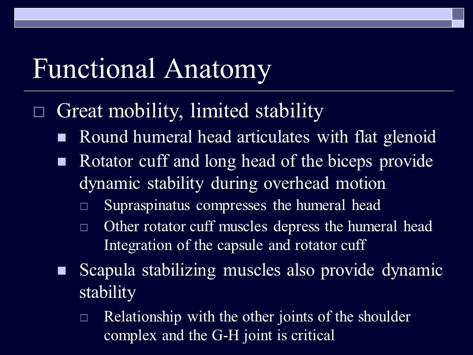 Functional Anatomy Great mobility, limited stability Round humeral head articulates with flat glenoid Rotator cuff and long head of the biceps provide
