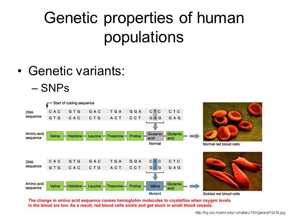 Genetic properties of human populations Genetic variants: –SNPs http://fig.cox.miami.edu/~cmallery/150/gene/sf12x16.jpg