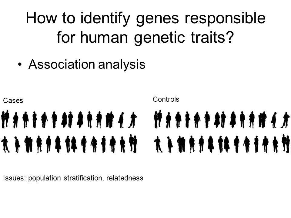 How to identify genes responsible for human genetic traits.