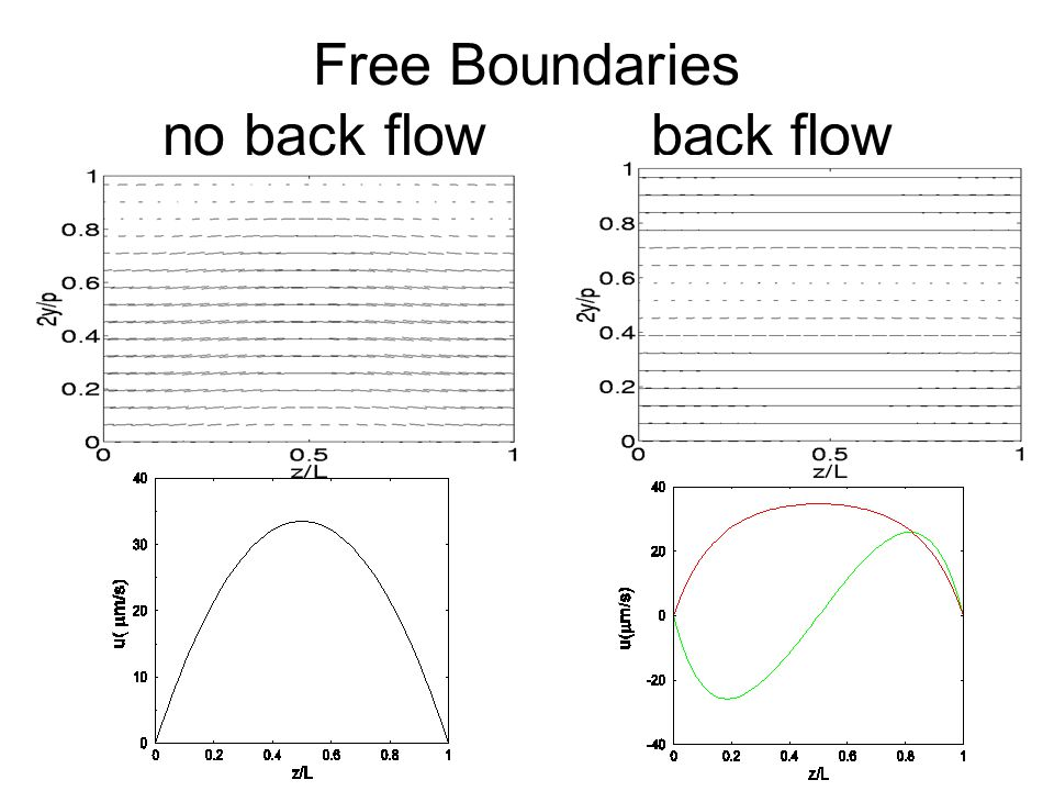Free Boundaries no back flow back flow