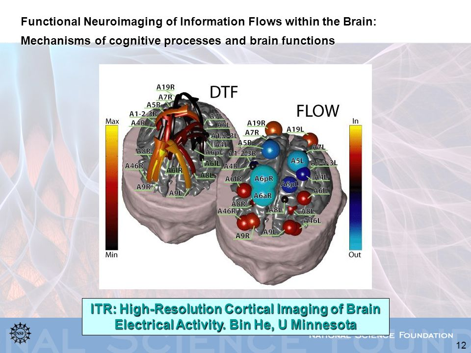 12 Functional Neuroimaging of Information Flows within the Brain: Mechanisms of cognitive processes and brain functions ITR: High-Resolution Cortical