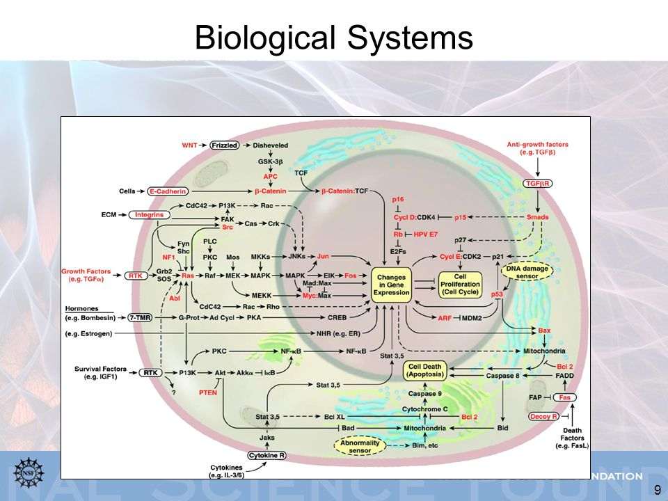 9 Biological Systems